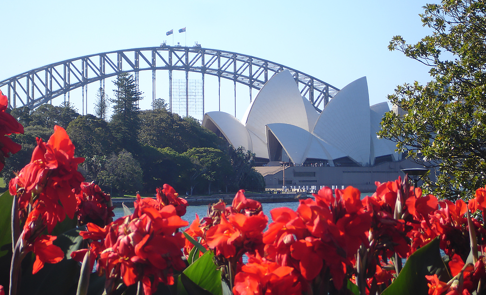 View of Harbour Bridge from the Botanic Gardens