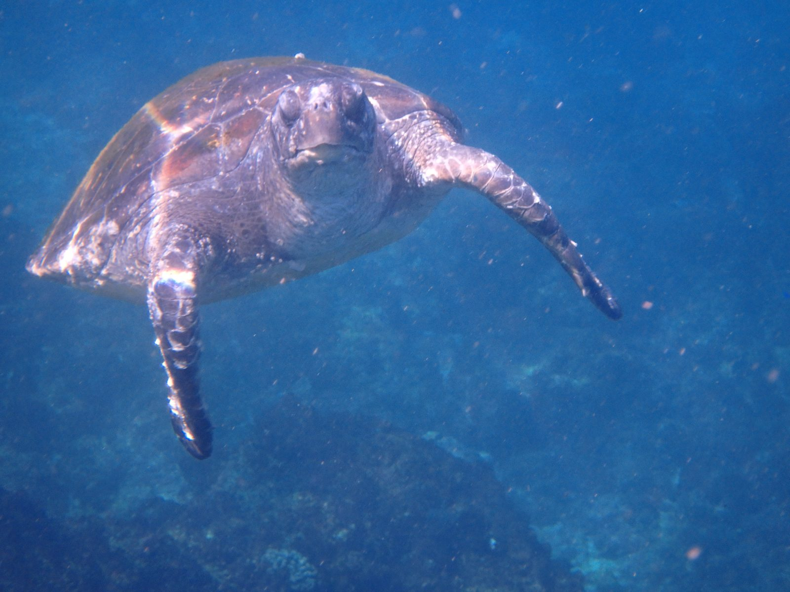 The turtles, the jellyfish and the shark of Byron Bay